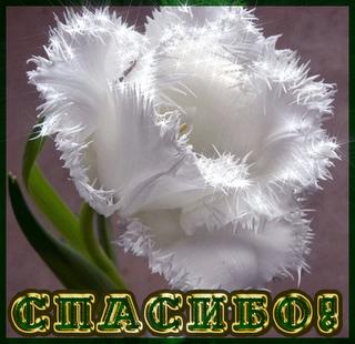!!!_1_~1_GIF_jpg_jpeg_jpeg (320x310, 182Kb)