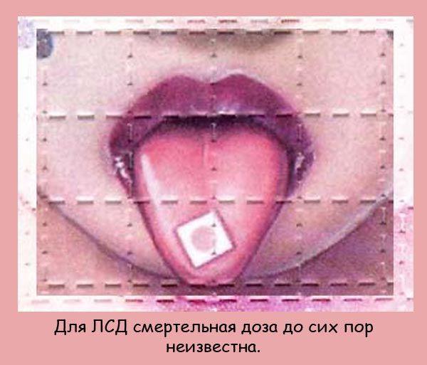 95418756_fakti_04 (600x513, 61Kb)