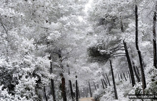 nature-2012-00006 (640x412, 129Kb)