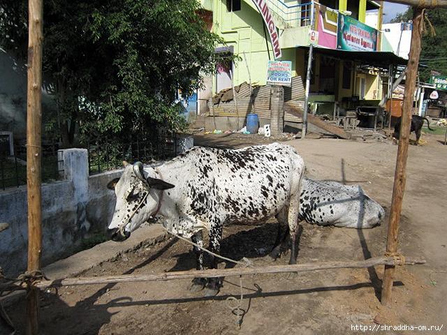 Индия, Тируваннамалай, 2012, 8 (640x480, 337Kb)