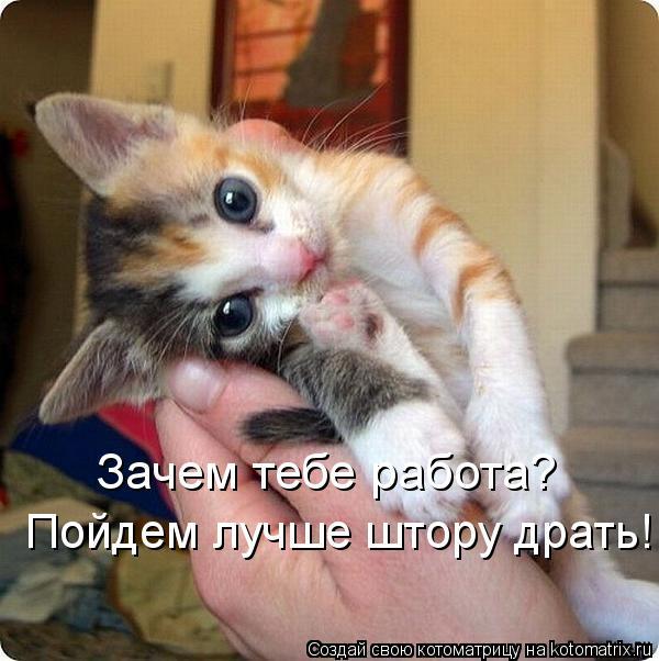 kotomatritsa__- (600x602, 54Kb)