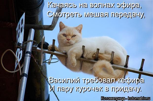 kotomatritsa_3k (620x412, 48Kb)