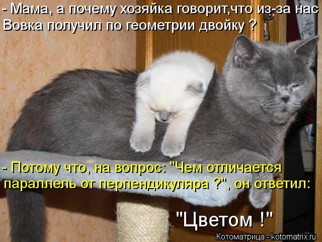 kotomatritsa_AE (640x480, 63Kb)