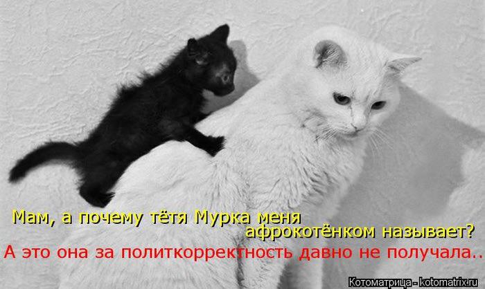 kotomatritsa_iC (700x418, 48Kb)