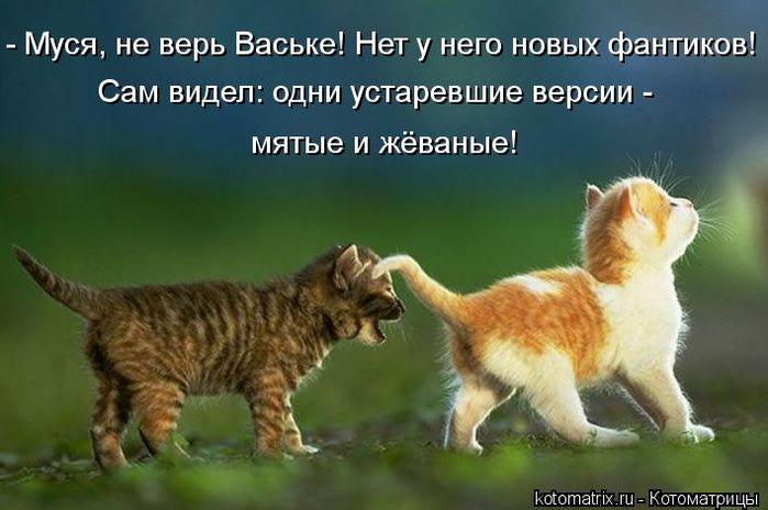 kotomatritsa_V (700x464, 47Kb)