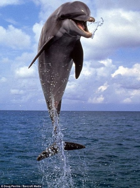 дильфин (2) (449x604, 64Kb)