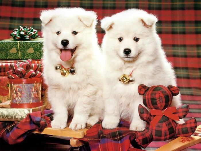 С наступающим Новым Годом и Рождеством. 47154
