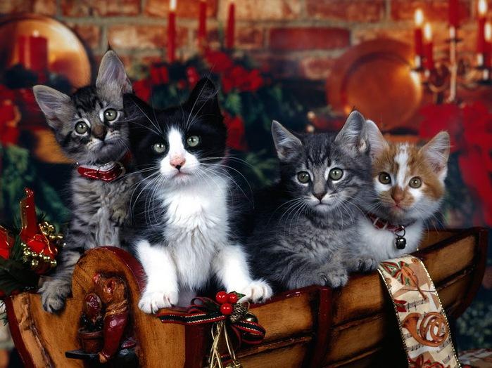 С наступающим Новым Годом и Рождеством. 67866