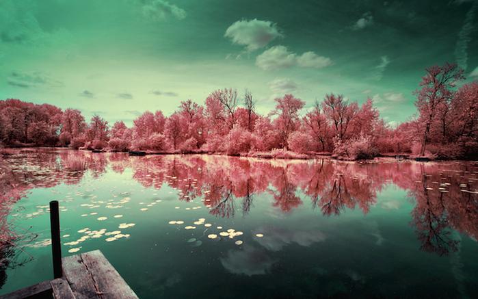 инфракрасные пейзажи фото 2 (700x437, 204Kb)