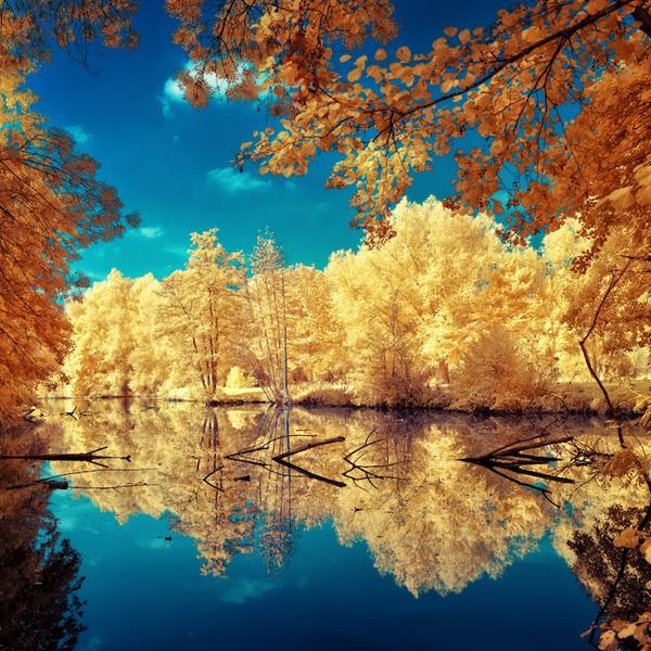 инфракрасные пейзажи фото 11 (600x600, 381Kb)