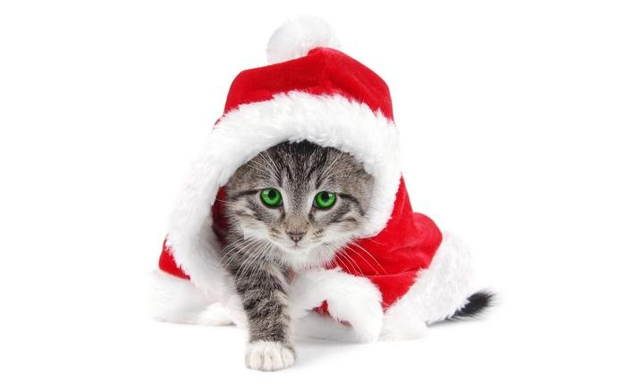 С наступающим Новым Годом и Рождеством. 77515