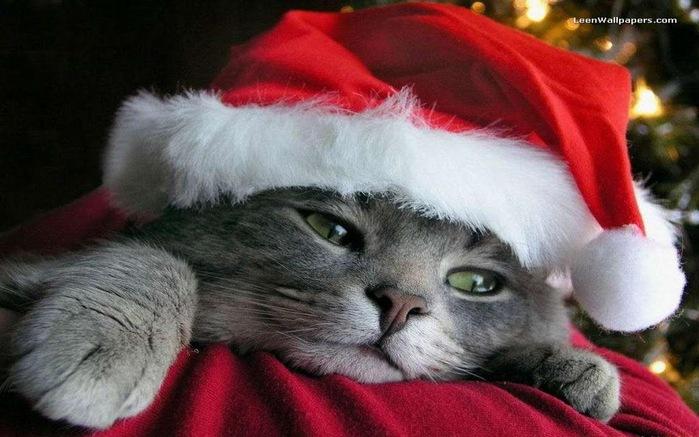 С наступающим Новым Годом и Рождеством. 42337