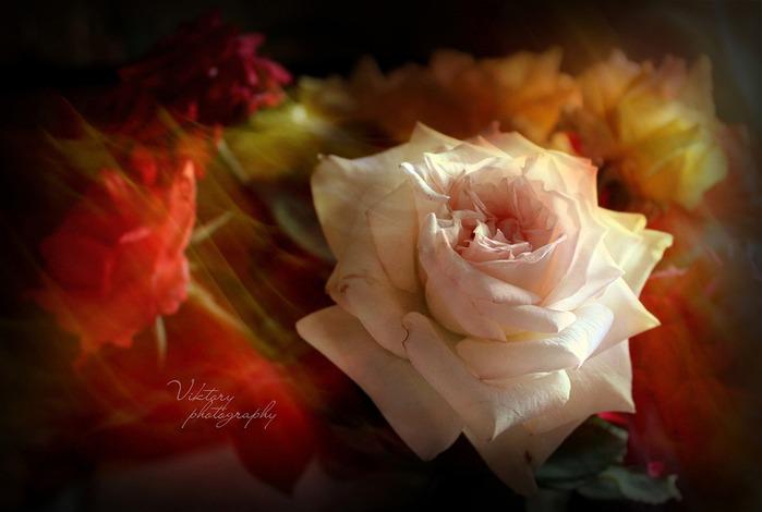 Цветы в дымке