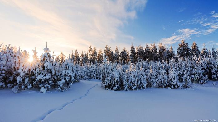 роща, посередине, голого, поля, зимний, пейзаж,стихи о зиме пушкина (700x393, 164Kb)