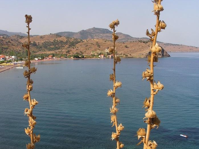 Остров Лесбос - Остров одетый в зелень сосен, оливковых деревьев и дубов. Часть 1 65771