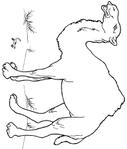 Превью верблюд (596x700, 90Kb)