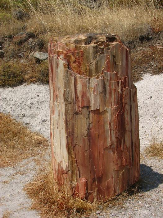Остров Лесбос - Остров одетый в зелень сосен, оливковых деревьев и дубов. Часть 1 61415