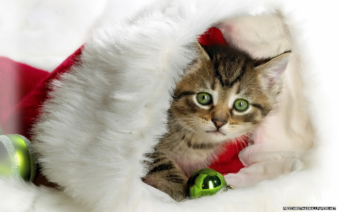 cute-christmas-kitty-464761 (700x437, 183Kb)