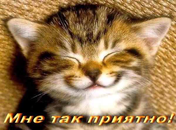 95548999_Spasibo_za_pozdravlenie_2.jpg