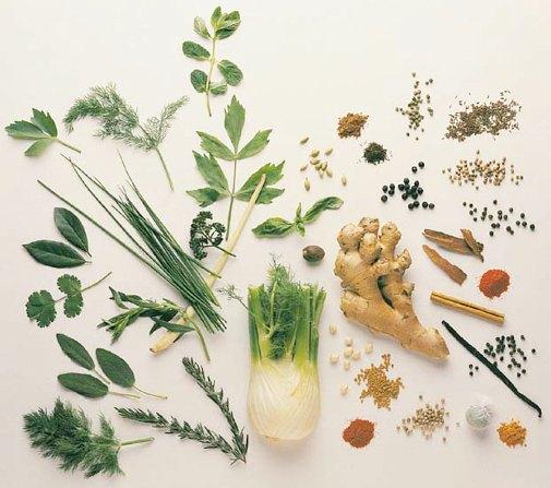 3279085_86008424_4524271_medicinal_herbs_guide_2 (505x447, 51Kb)