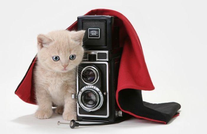 4783240_cats_01 (700x453, 30Kb)