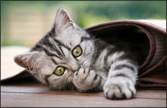4783240_cats_06 (700x453, 46Kb)