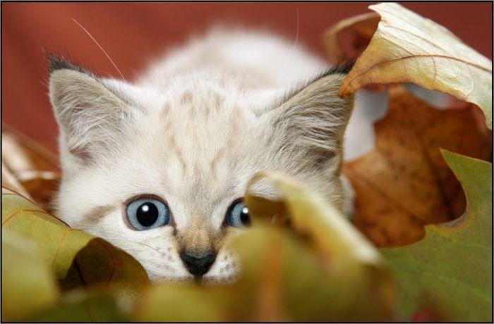 4783240_cats_15 (700x460, 40Kb)