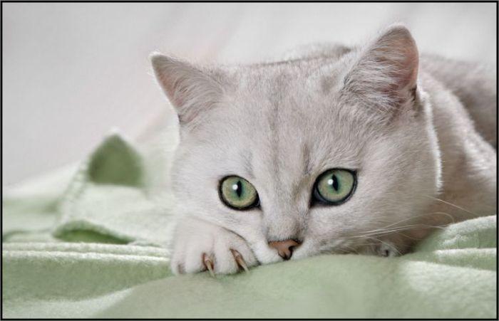 4783240_cats_17 (700x451, 35Kb)