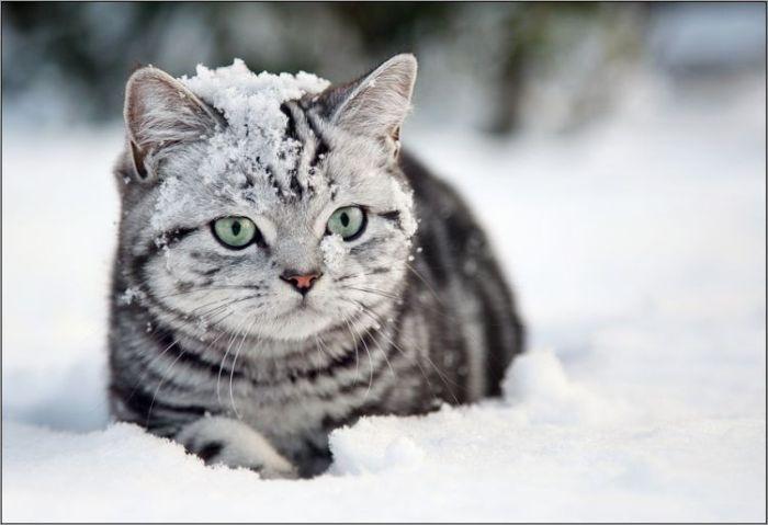 4783240_cats_19 (700x479, 39Kb)
