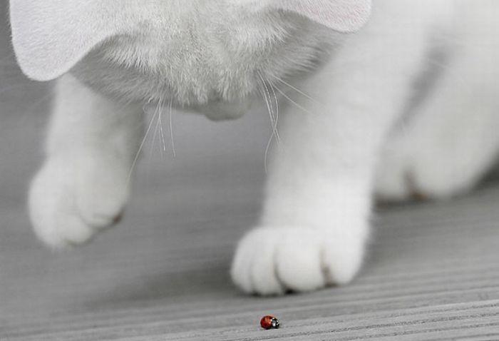 4783240_cats_23 (700x478, 26Kb)