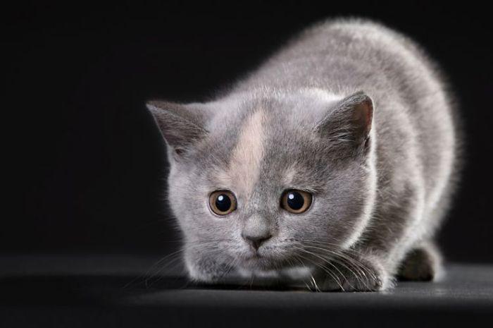4783240_cats_26 (700x465, 30Kb)