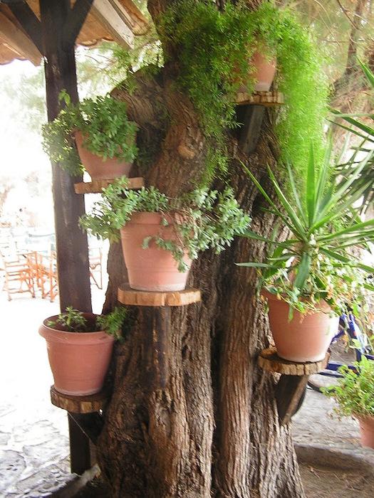 Остров Лесбос - Остров одетый в зелень сосен, оливковых деревьев и дубов. Часть 1 18284