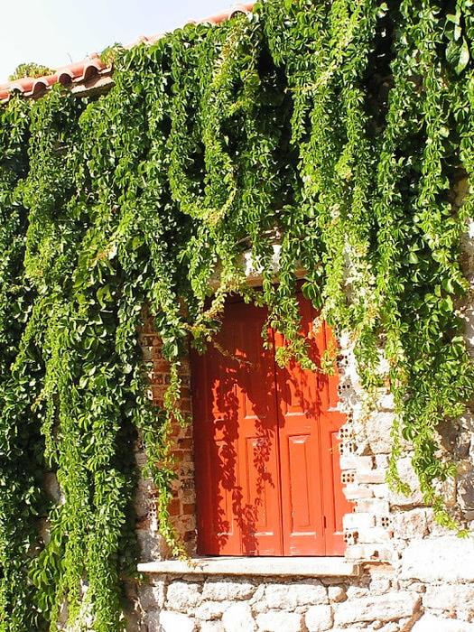 Остров Лесбос - Остров одетый в зелень сосен, оливковых деревьев и дубов. Часть 1 39913