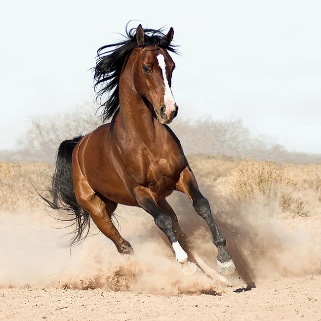 кони (650x650, 307Kb)