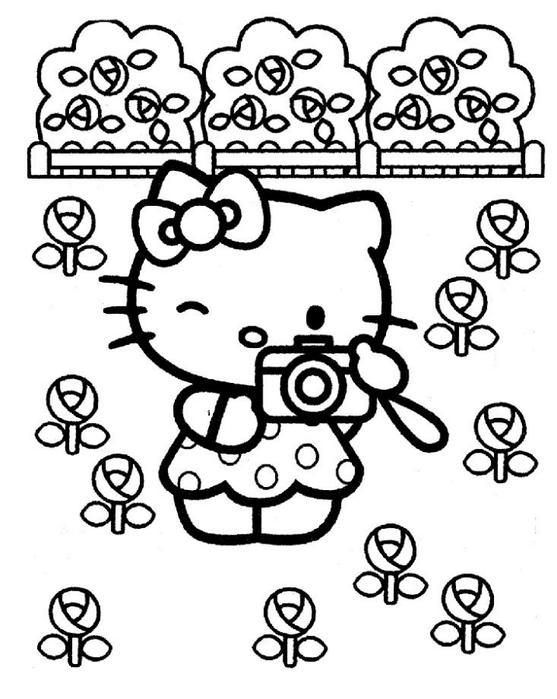 贴图:Hello Kitty ! (第三部分) - maomao - 我随心动
