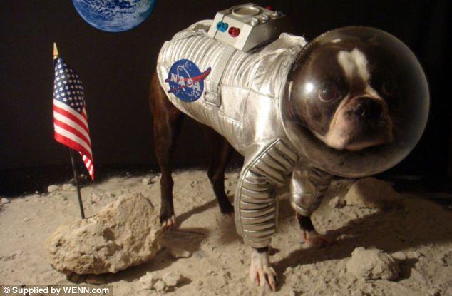 смешные собаки фото 1 (634x415, 41Kb)