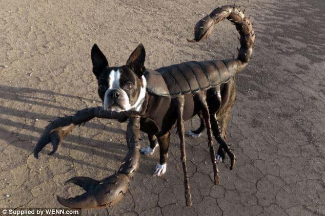 смешные собаки фото 3 (634x422, 57Kb)