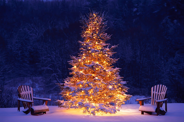 НГ ель lit-christmas-trees-in-snow (640x427, 104Kb)