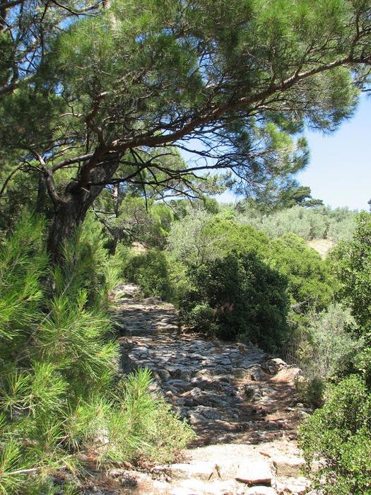 Остров Лесбос - Остров одетый в зелень сосен, оливковых деревьев и дубов. Часть 1 23280