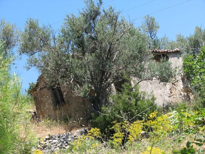 Остров Лесбос - Остров одетый в зелень сосен, оливковых деревьев и дубов. Часть 1 94258