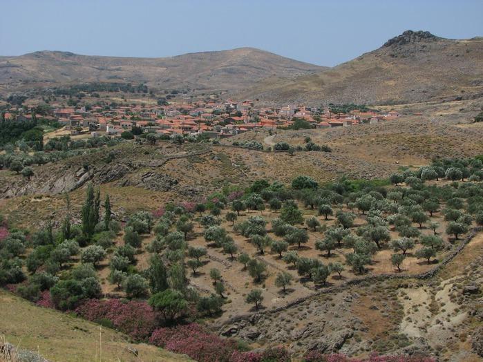 Остров Лесбос - Остров одетый в зелень сосен, оливковых деревьев и дубов. Часть 1 71199