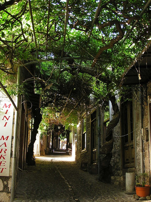 Остров Лесбос - Остров одетый в зелень сосен, оливковых деревьев и дубов. Часть 1 97262