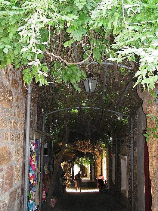 Остров Лесбос - Остров одетый в зелень сосен, оливковых деревьев и дубов. Часть 1 30014