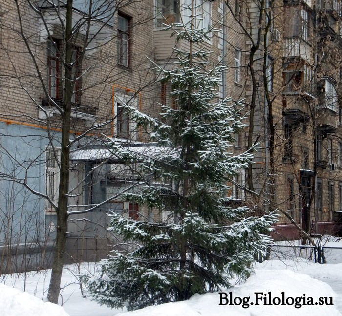 Зеленая ель во дворе в снегу. Живая елка во дворе под снегом/3241858_8 (700x647, 177Kb)