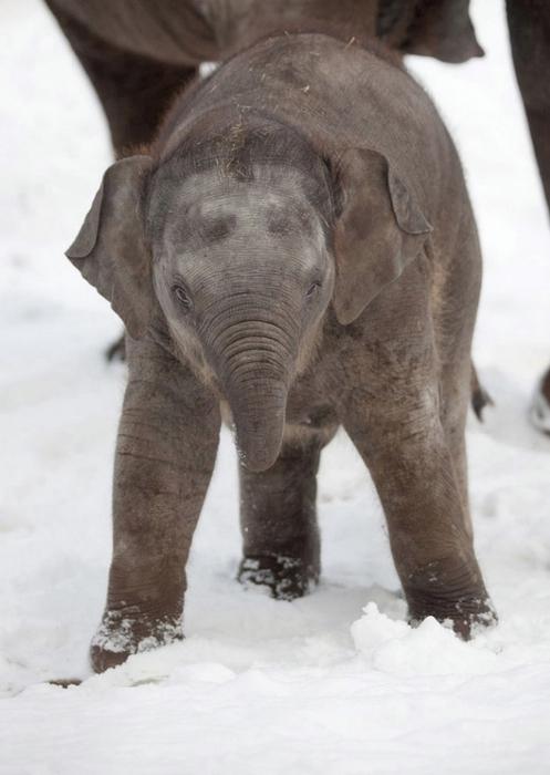 смешной слоненок фото 3 (497x700, 185Kb)