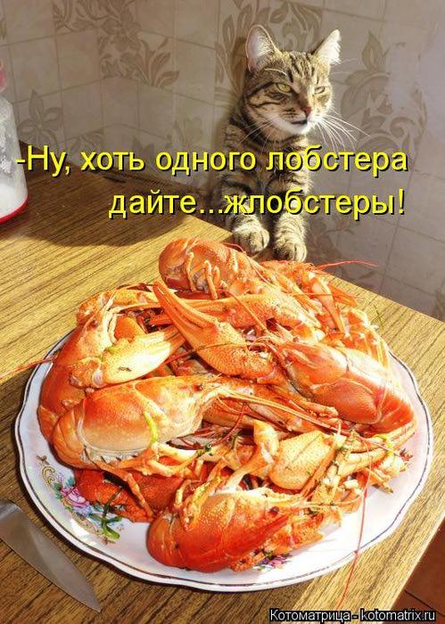 kotomatritsa_07 (499x700, 88Kb)