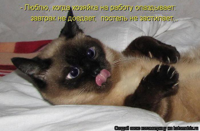kotomatritsa_o (700x458, 49Kb)