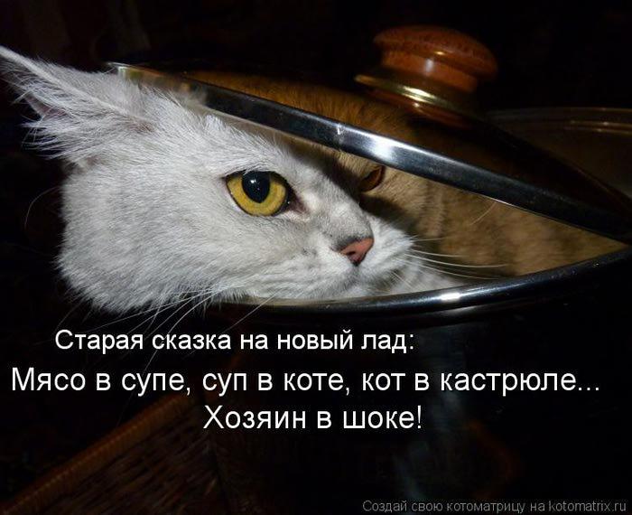 kotomatritsa_QT (700x570, 53Kb)