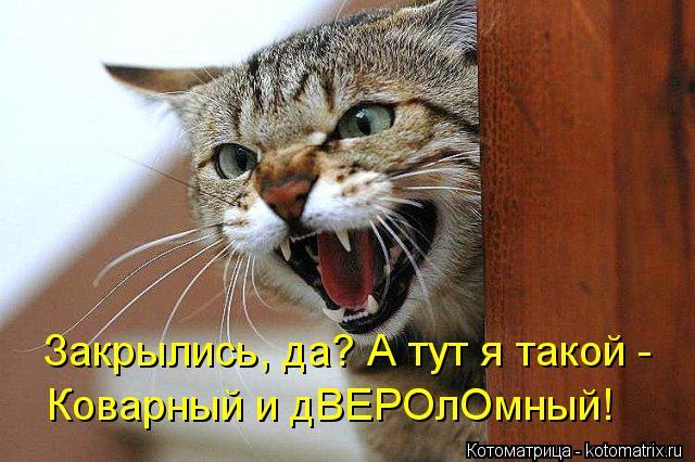 kotomatritsa_z (640x426, 61Kb)