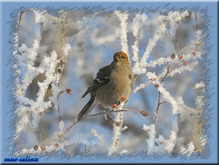 Воробышек-зимой (450x339, 254Kb)